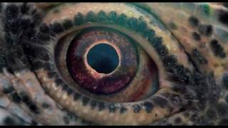 VOYAGE OF TIME  Official Trailer  Coming Soon HD
