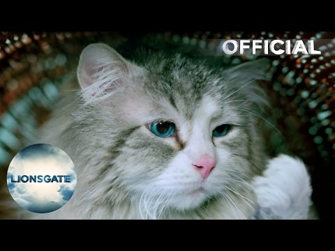 Nine Lives (2016) (UK TV Spot 'Cat Vox Pops')