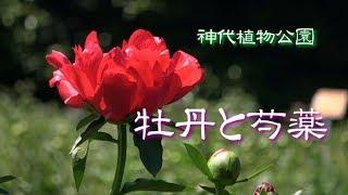 神代植物公園「牡丹と芍薬」PeonyGarden