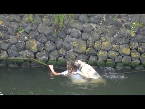 Dog rescued from the water / Hond uit water gered  (IJ, Amsterdam)
