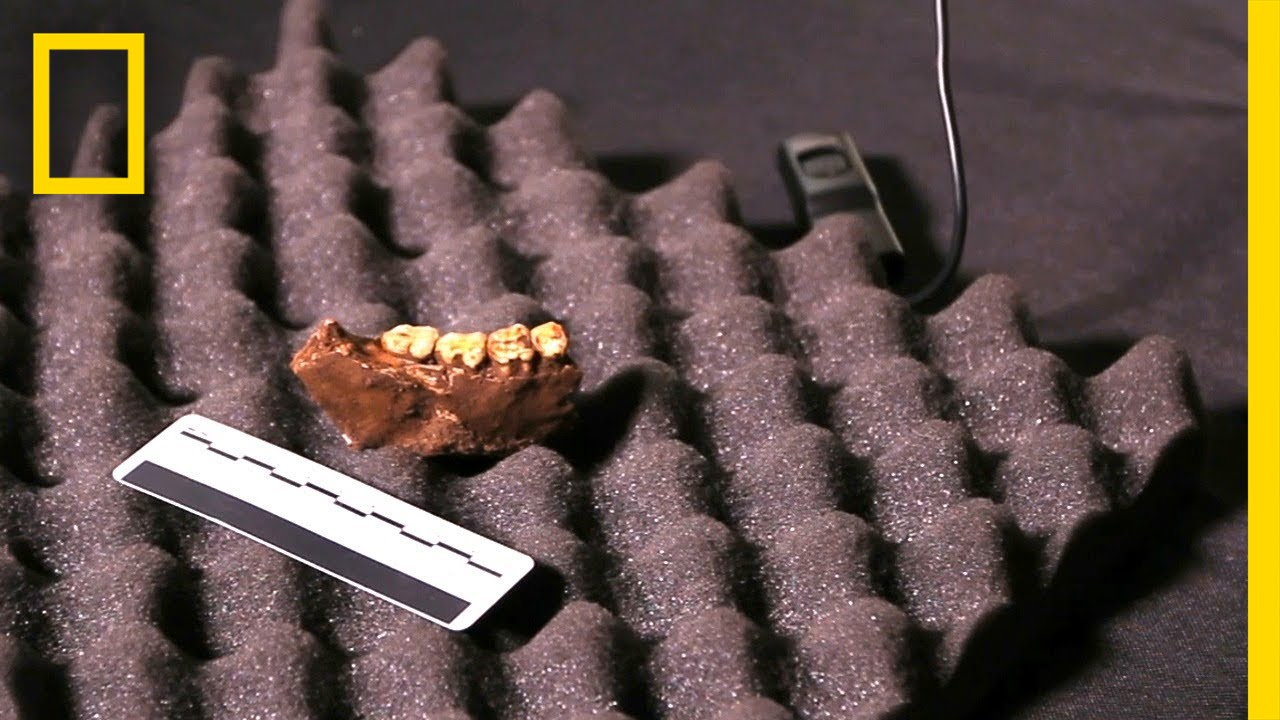 See First Fossil Recovered from Cave (Expedition Update)   National Geographic thumbnail