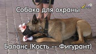 Собака для охраны, баланс кость -- фигурант, пищевая и активно-оборонительная реакция
