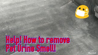 How To Remove Pet Urine Odor From Your Car Carpet!
