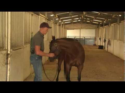 Equine Chiropractic With Horse Chiropractor, Geoff (Jeff) Clarke