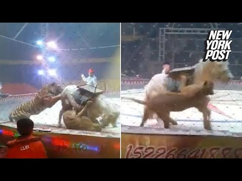 Brutal video of lion and tiger sinking their teeth into a horse at the circus | New York Post