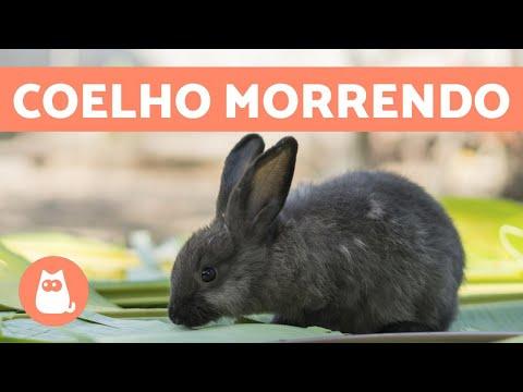 5 sinais de que um coelho vai morrer