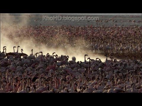 Animal Documentary 2015| Africa: Wild Kalahari | National Geographic