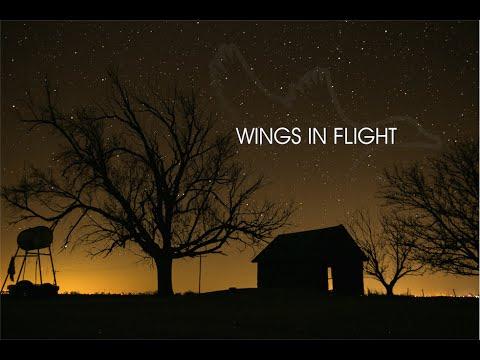 """HW 3.10 """"Wings In Flight"""""""