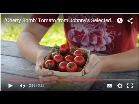 , title : ''Cherry Bomb' — Certified-Organic Cherry Tomato Variety bred by Johnny's Selected Seeds