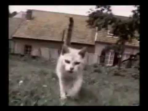 Funny Cats ECards Cats in trouble funny cats compilation Funny..