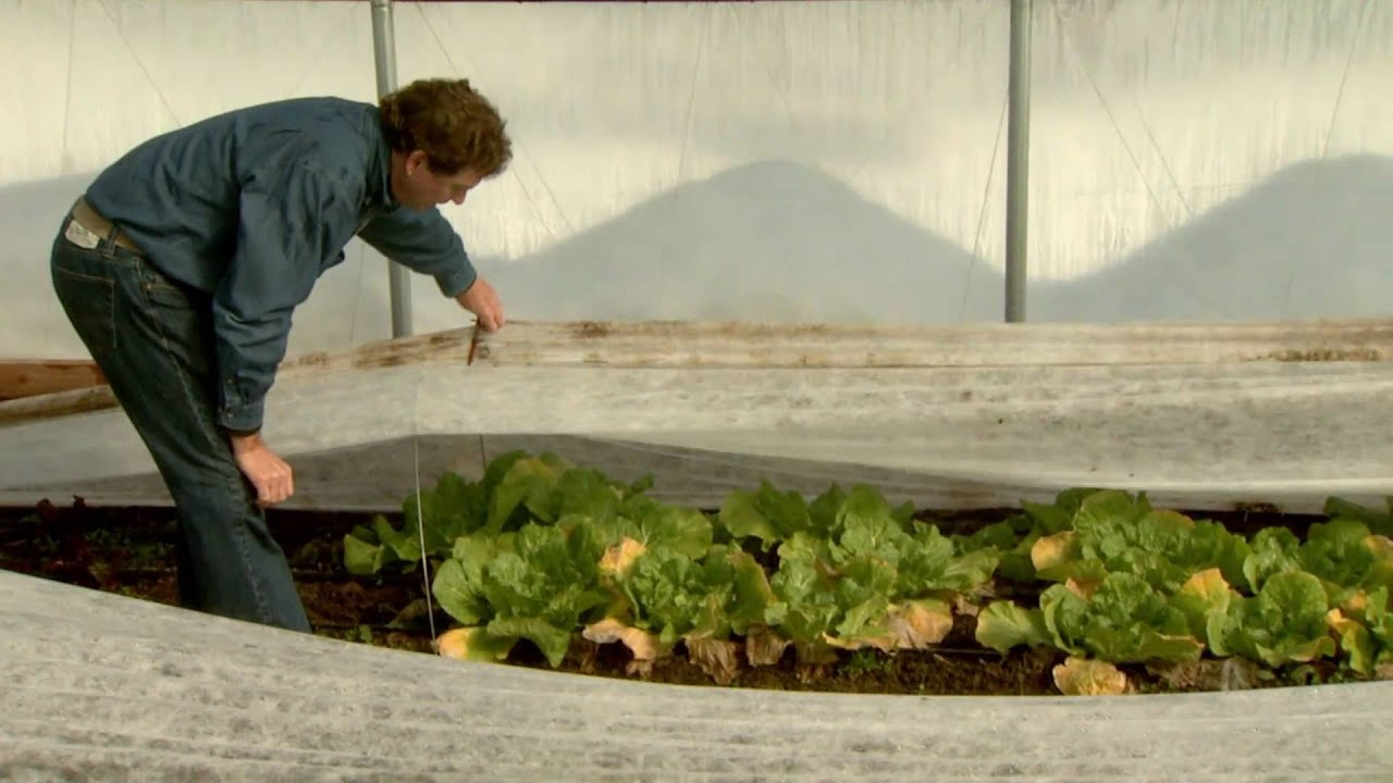Undercover farming: High tunnels extend the growing season