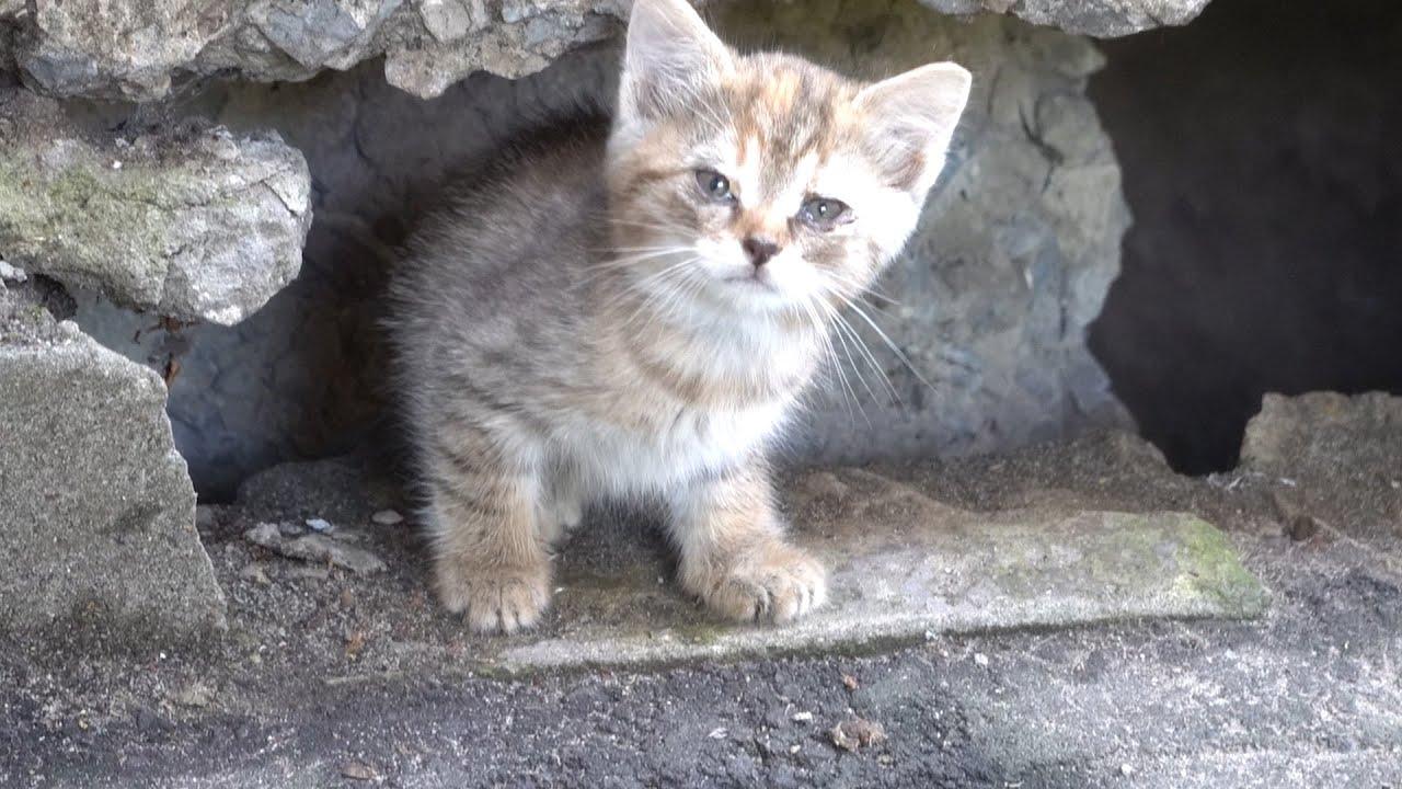 A new little kitten lives under a concrete slab