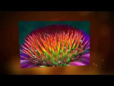 Pamahid laban kuko halamang-singaw mula sa mga itlog at suka