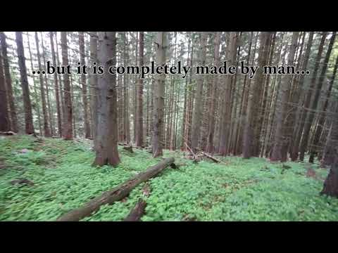 Short video where you can see the contrast between primary and commercial forests. The video was made in Natinal Nature Reserve Kundracka where is no buffer zone between these forests types.