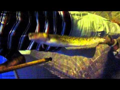 La pesca di ha relazione il video Di Kamchatka