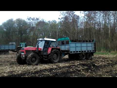 Trágyaszórás | MTZ 82 Turbo + 2x MTZ - T088+RA80 | Weimar | Spreading Manure 2020