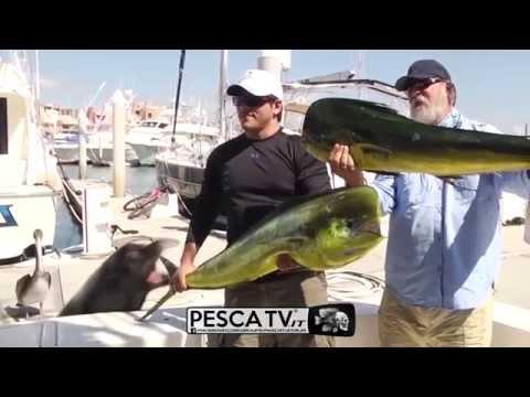 La pesca su un serbatoio matyrsky del 2017 di video