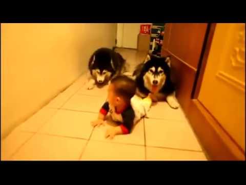 Gấu có thể k có nhưng chó nhất quyết phải làm 2 em