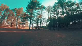 Cruizz In The Woods - Fpv Freestyle