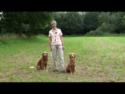 Hunde spielen Ball Hundespielzeug Apportierspielzeug | HUND-unterwegs.de