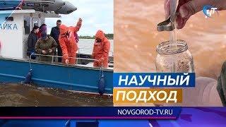 Специалисты института рыбного хозяйства взяли пробы воды из озера Ильмень