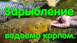 Озера для рыбалки в одесской области