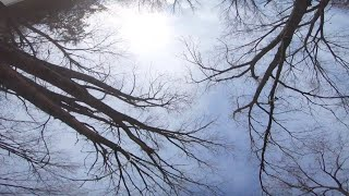 More tree Skeletons - Almost Winter FPV Freestyle Rippage