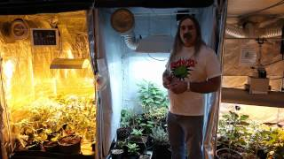 Growing Edge Technologies How Light Effects Your Grow