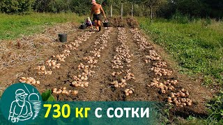 Growing Potatoes with a Slope without Hilling 🚀 Potato Cultivation According to Gordeev's Technology