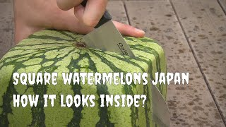 Square watermelons Japan. English version
