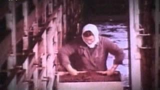 Разведение осетровых рыб в СССР