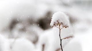 "Peaceful Christmas Instrumental Music, Piano Christmas Music, ""Christmas Peace"" by Tim Janis"