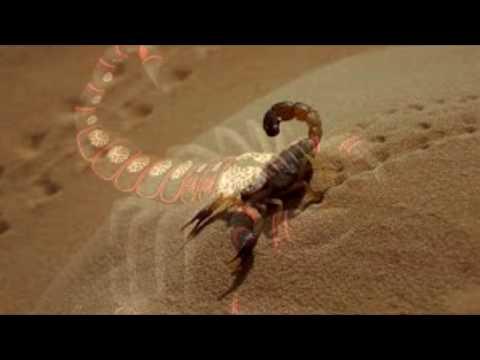 Скорпион знак задиака