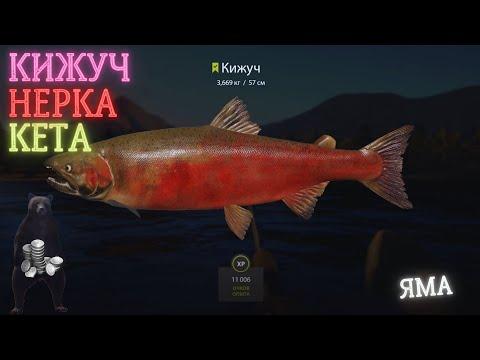 Русская рыбалка 4 (рр4) р. яма кижуч кета фарм