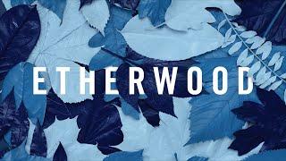 Etherwood - The Rain Will Fall (feat. LSB)