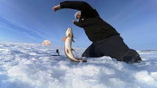 Зимния рыбалка на ириклинском водохранилище