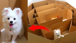 Hexagon Maze And Ball For Snowball Dog Hugo Hamster And Corn Kitten Playing