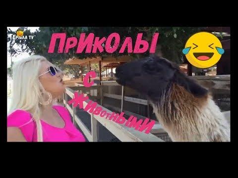 Я РЖАЛ ПОЛЧАСА / СМЕШНЫЕ ЖИВОТНЫЕ  2019