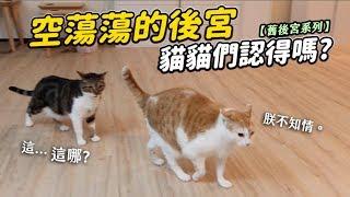 【空蕩蕩的後宮,貓貓們認得嗎?】舊後宮系列 志銘與狸貓