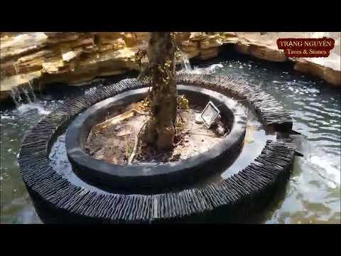Test hồ cá koi thác nước