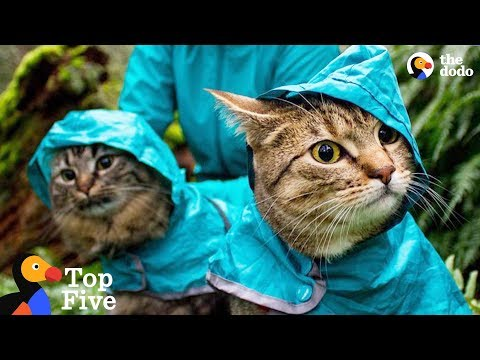 Adventure Cats Who Were Once Strays Have The Best Moms Now + Other Cat Rescues | The Dodo Top 5