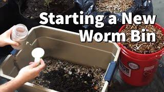 How I Start A New Worm Bin
