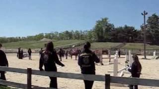 FFA horse judging