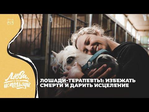 Я свободен: Спасти лошадь - терапевта!