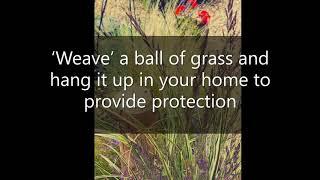 Magical Plants: Grass
