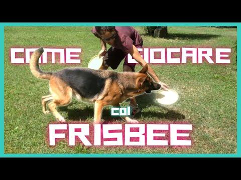 INSEGNARE al cane i COMANDI base del DISC DOG