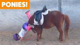 Funniest And Cutest Ponies   Funny Pet Videos