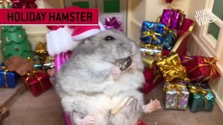 Сборник лучших видеороликов 1 недели декабря | JukinVideo