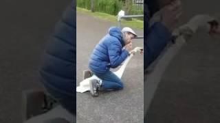 animale salveaza o lebada