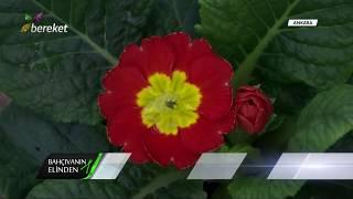 Bahçıvanın Elinden - İç Mekan Süs Bitkilerinin Bakımı